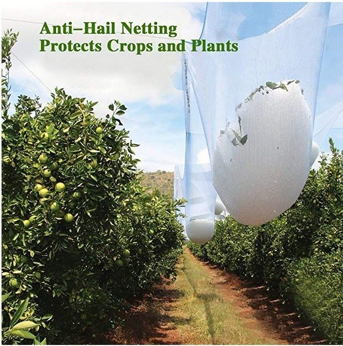 Agricultural HDPE White Anti Hail Net , UV Stabilized Fruit Tree Netting